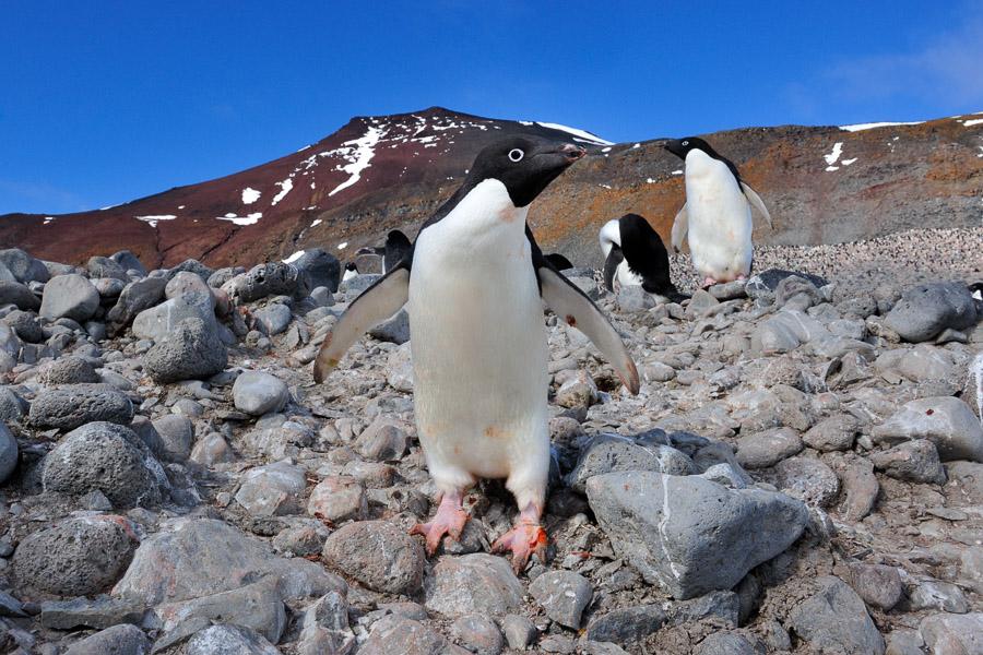 Antarktika_0283