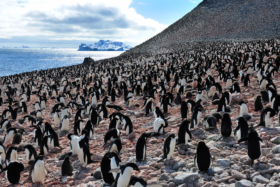 Antarktika_0288