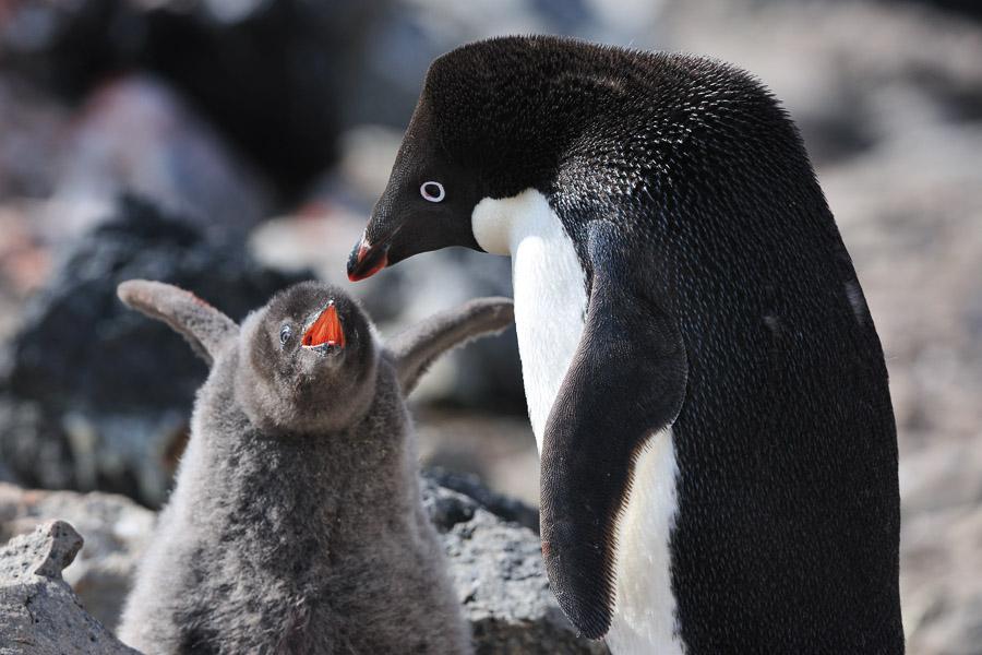 Antarktika_0308