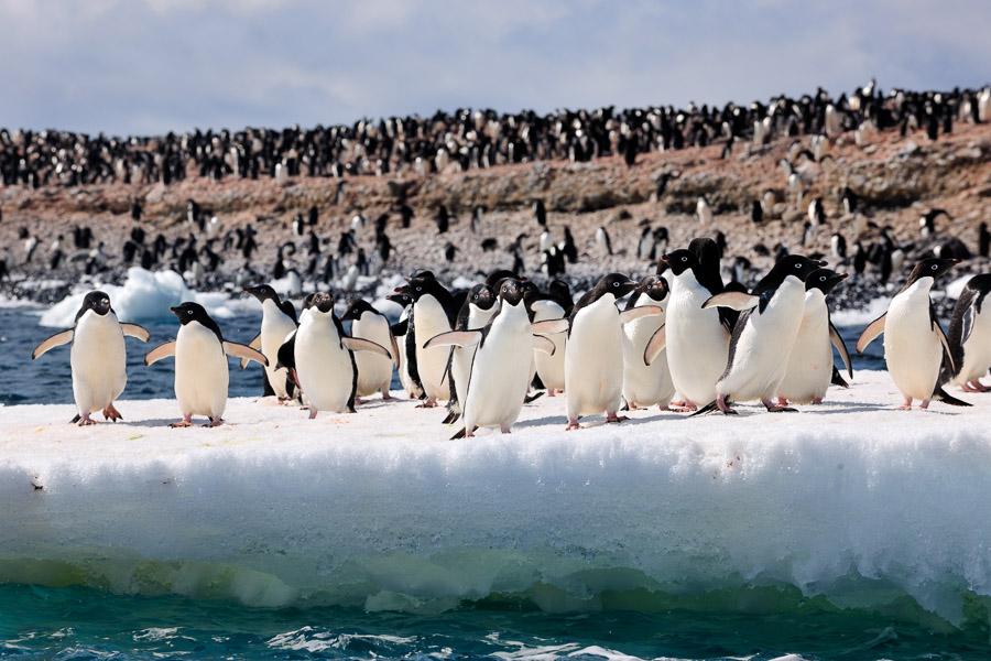 Antarktika_0325