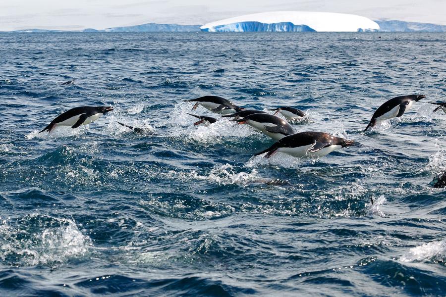 Antarktika_0330