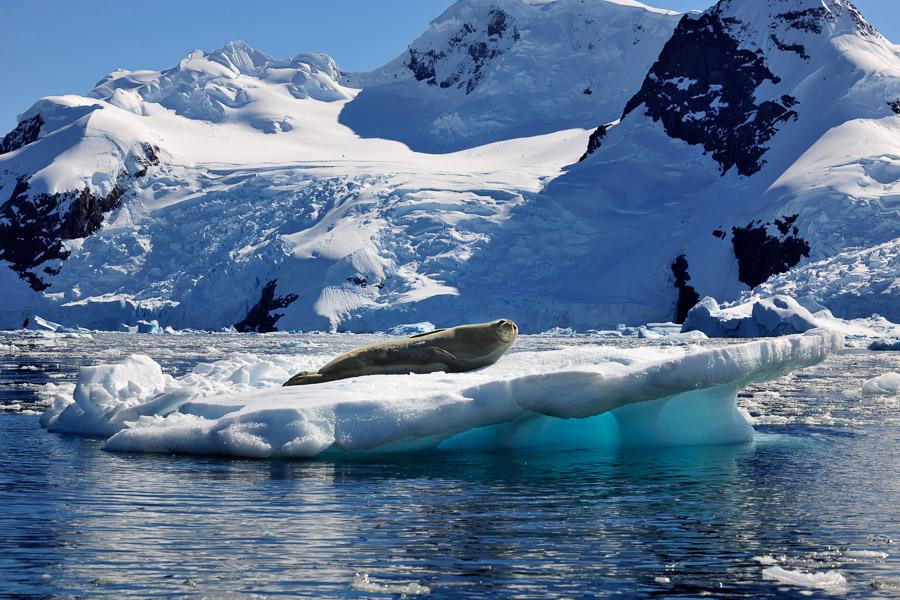 Antarktika_0521