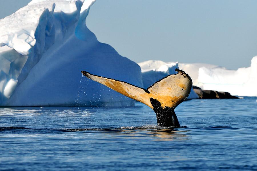 Antarktika_0762