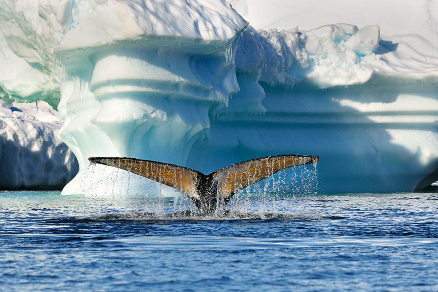 Antarktika_0769