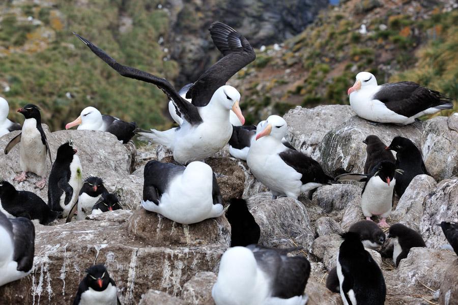 Falkland_0059