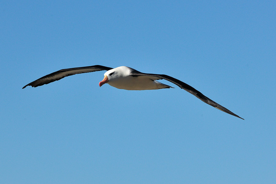 Falkland_0134