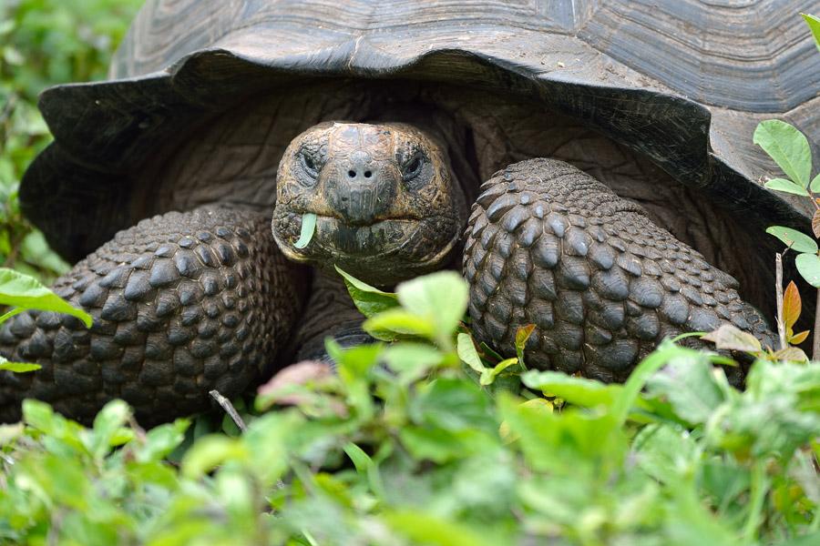 Galapagos_2013_0027
