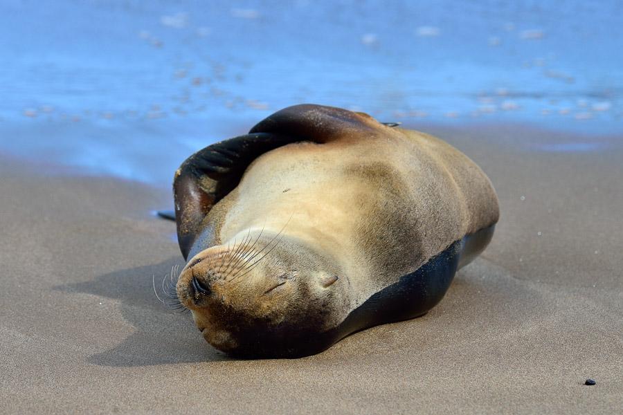 Galapagos_2013_0082