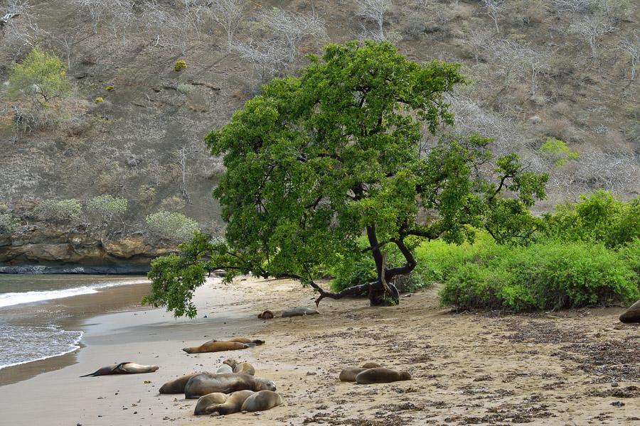 Galapagos_2013_0084