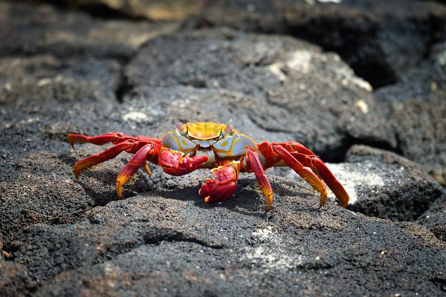 Galapagos_2013_0130