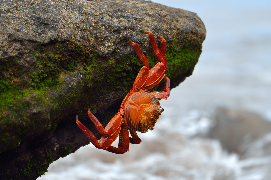 Galapagos_2013_0143