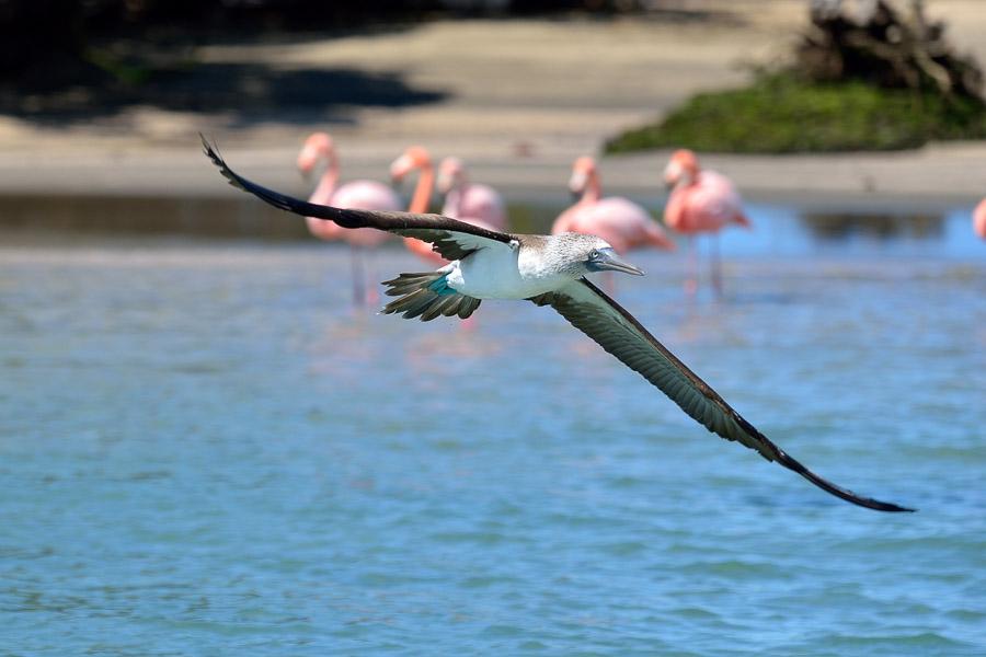 Galapagos_2013_0210