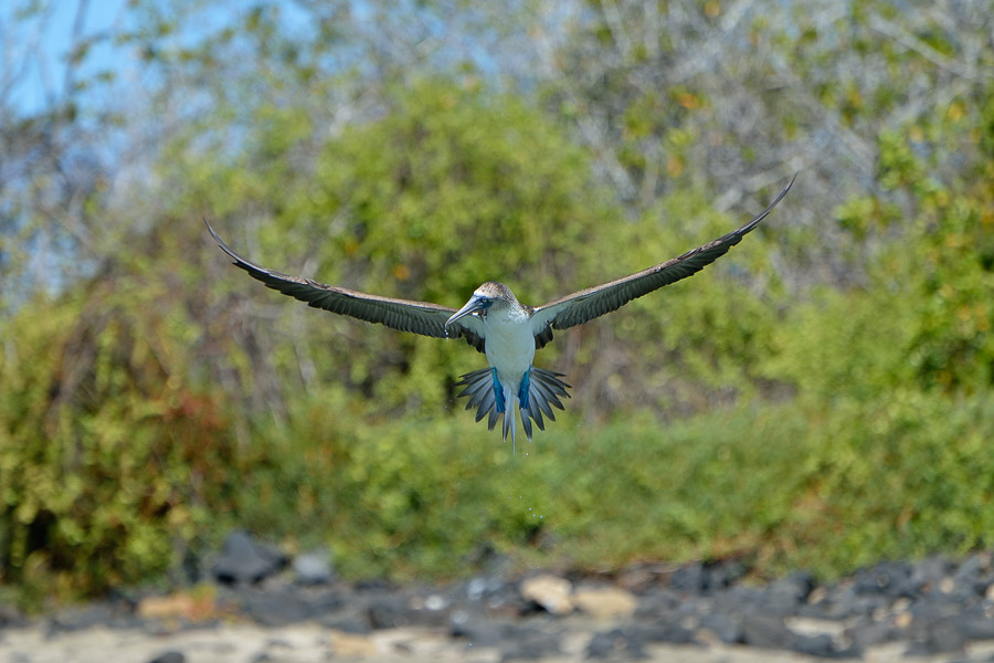 Galapagos_2013_0213