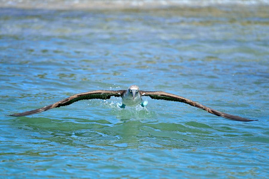 Galapagos_2013_0229