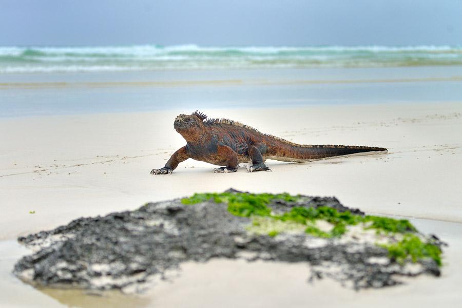 Galapagos_2013_0324