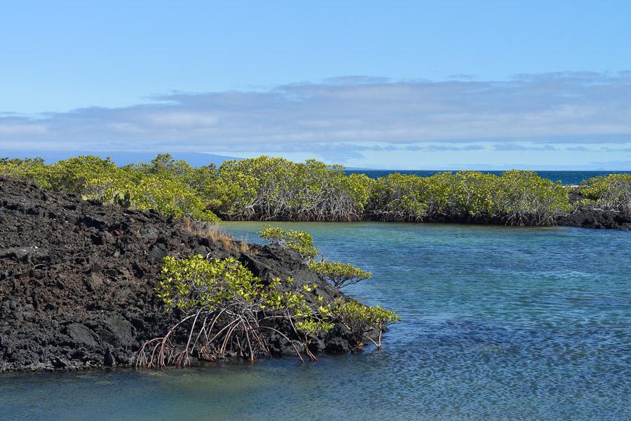 Galapagos_2013_0382