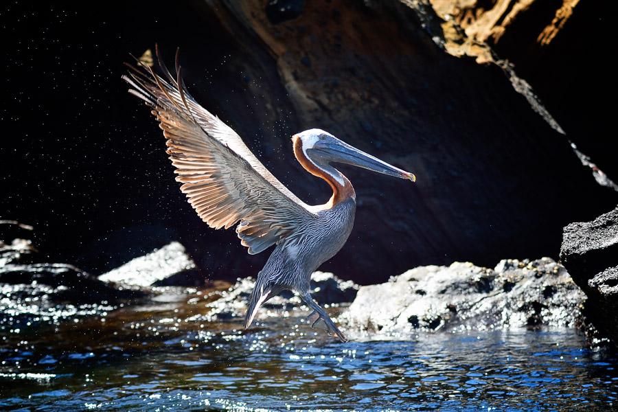 Galapagos_2013_0693-2