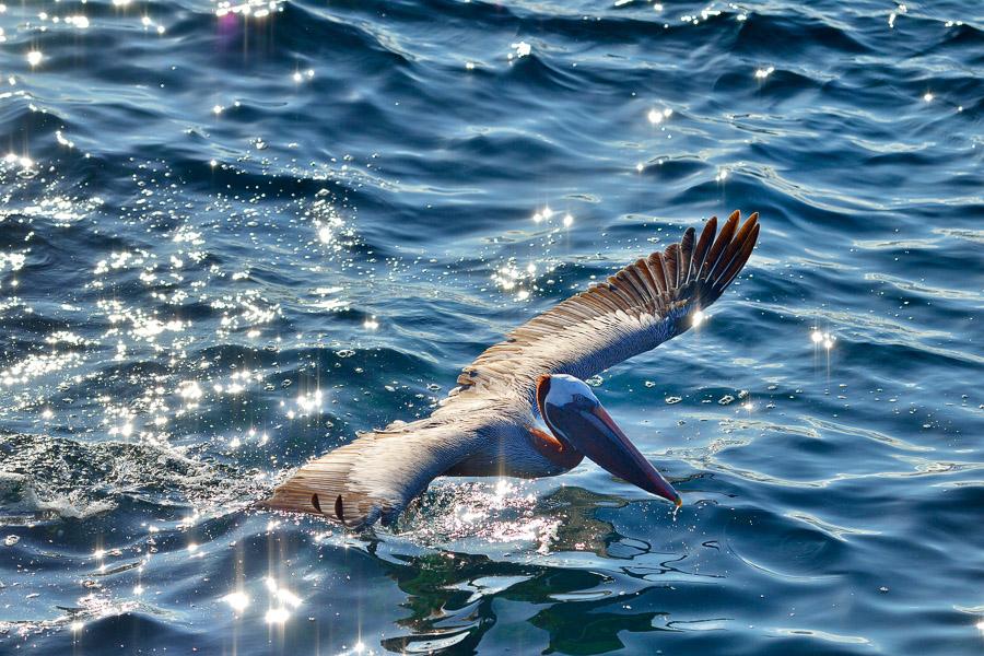 Galapagos_2013_1077