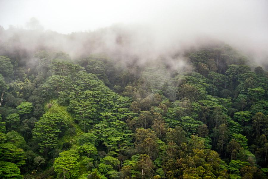 Hawaii-2017-0360
