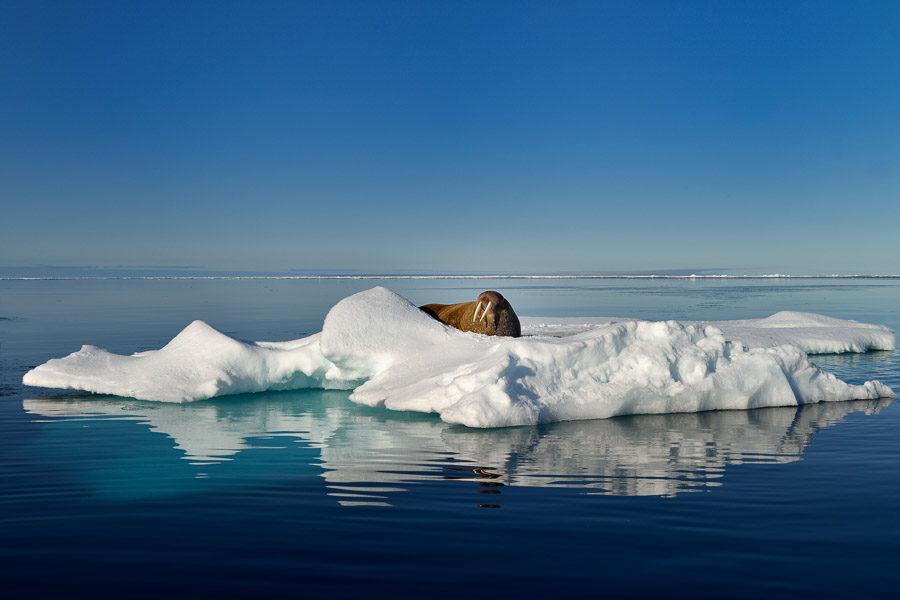 Polar-Quest-2014-0384