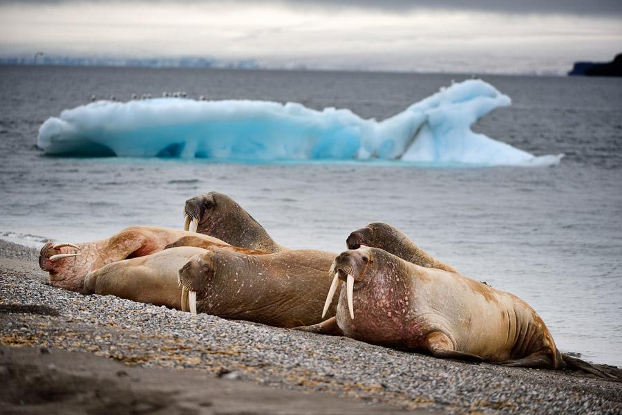 Polar-Quest-2014-0516