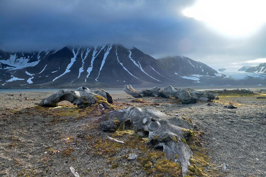 Polar-Quest-2014-1065