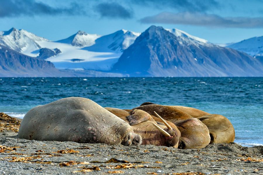 Polar-Quest-2014-1252