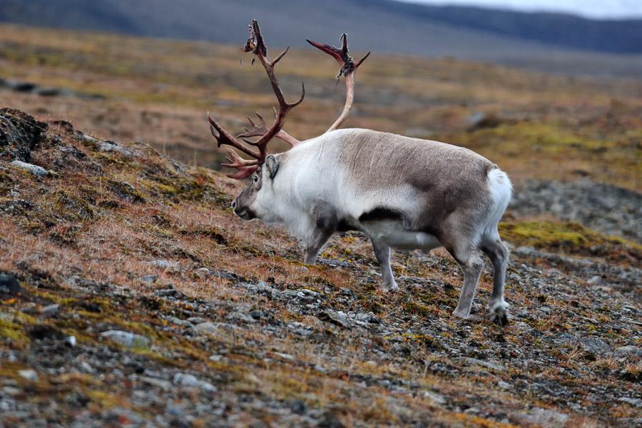 Svalbard_09_2009_0889