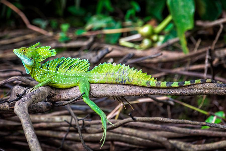Costa-Rica_0234