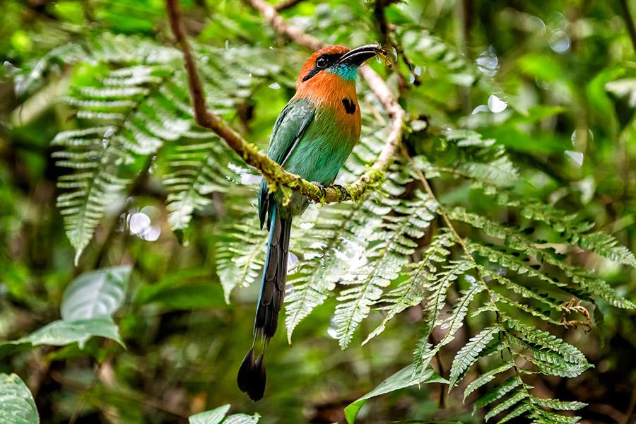 Costa-Rica_0390