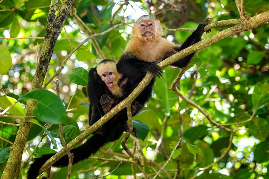 Costa-Rica_0486