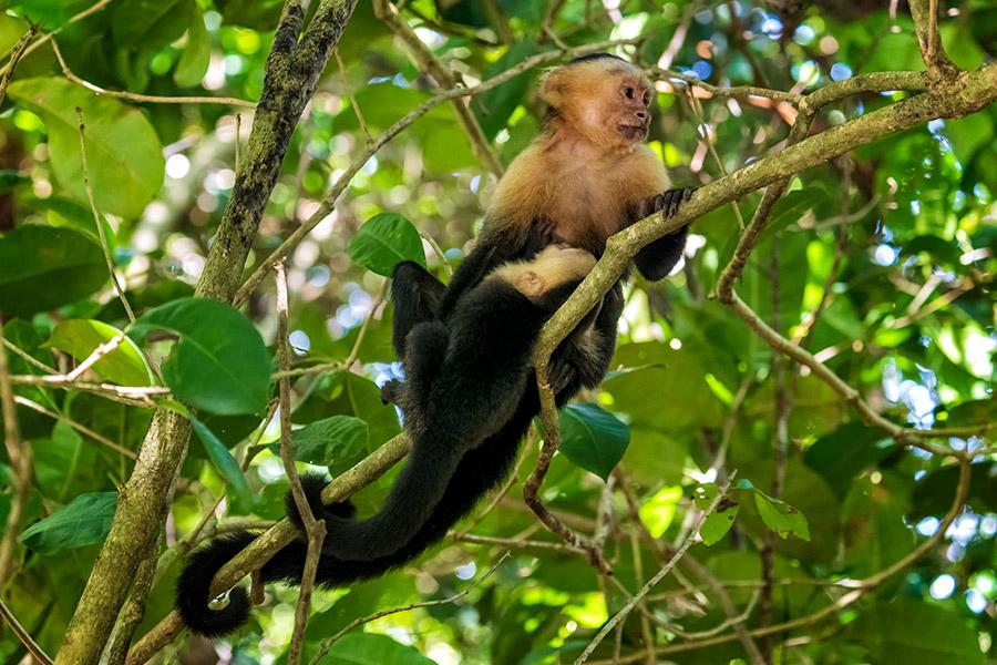 Costa-Rica_0496