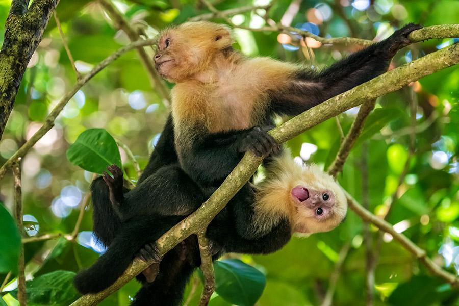 Costa-Rica_0499