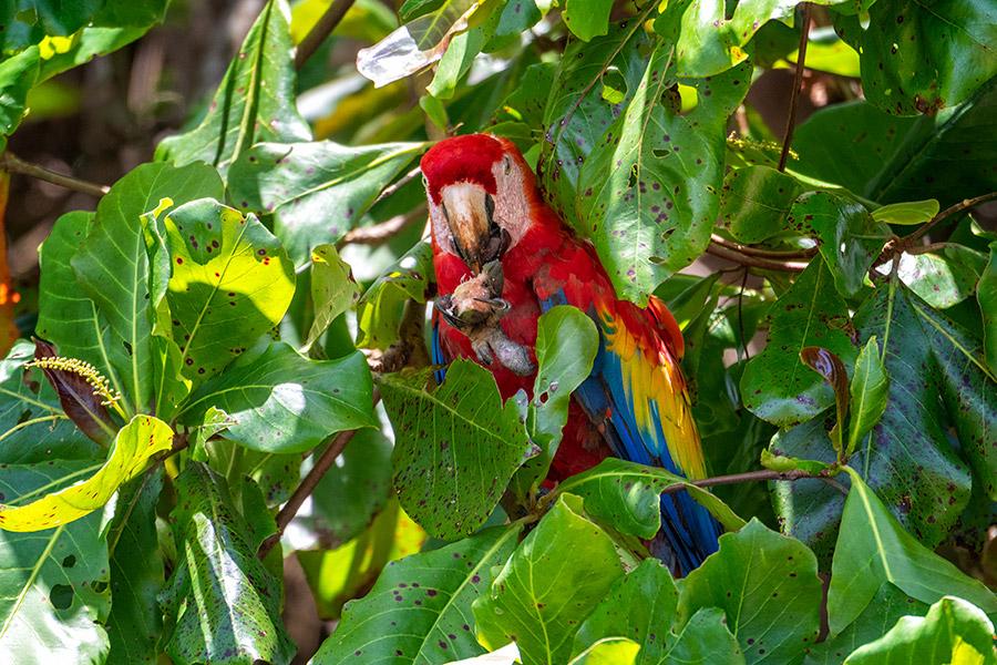 Costa-Rica_0646