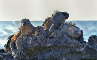Galapagos 2013