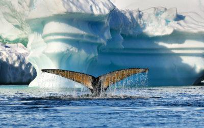 Antarctic Penisula