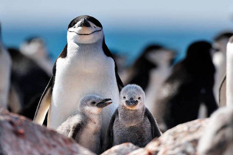Antarktika_0127
