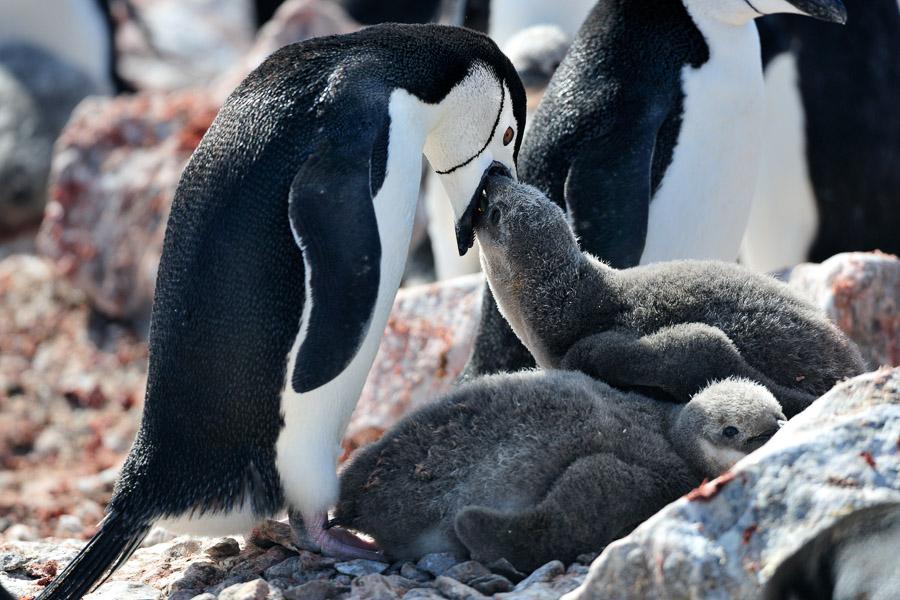 Antarktika_0132