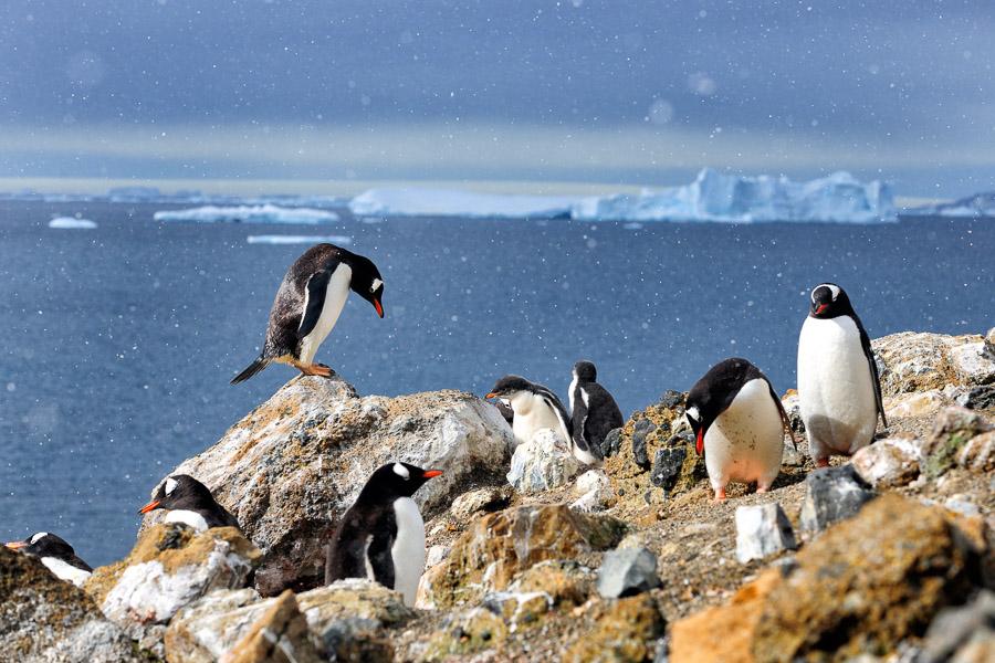 Antarktika_0409
