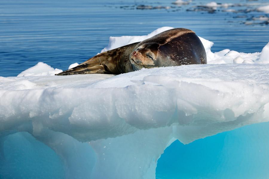 Antarktika_0529
