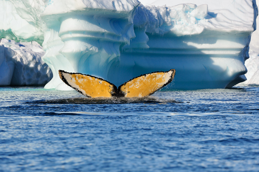 Antarktika_0770