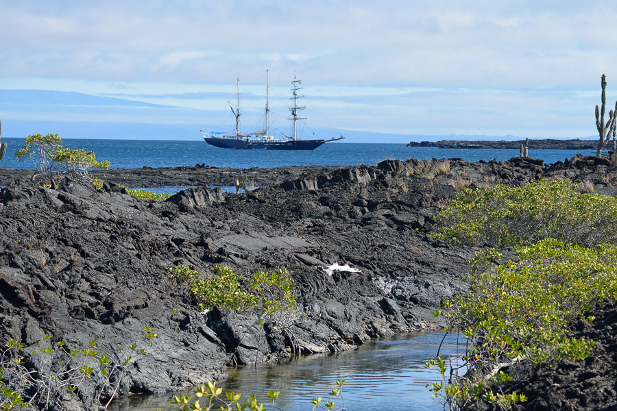 Galapagos_2013_0364