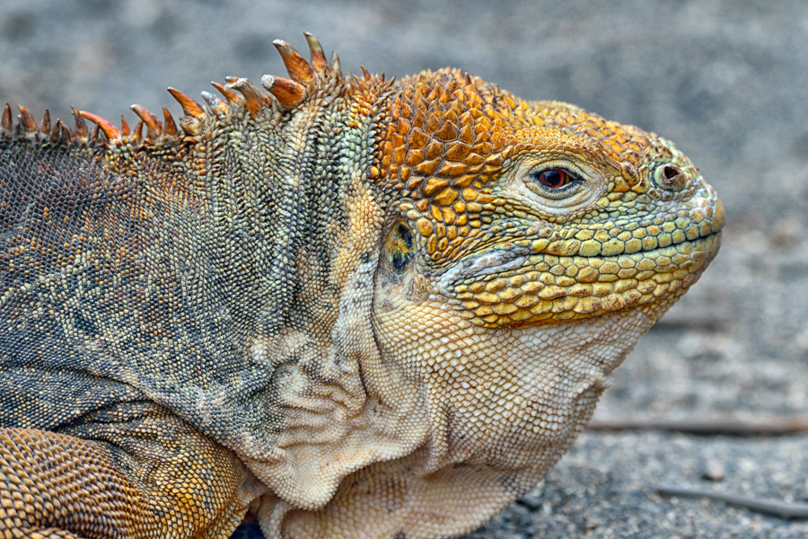 Galapagos_2013_0489