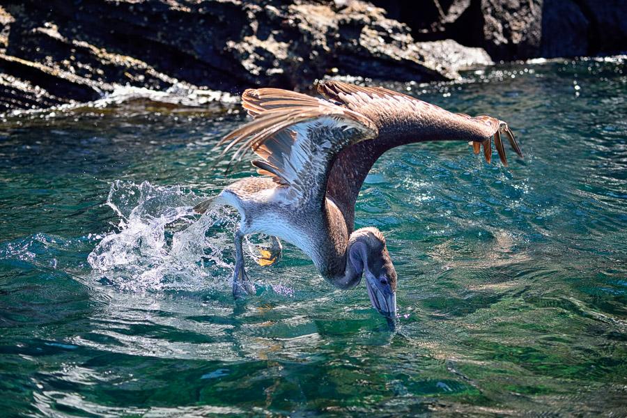 Galapagos_2013_0710-b