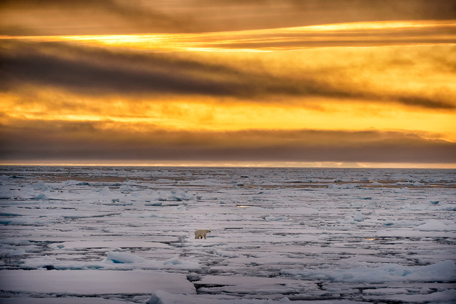 Polar-Quest-2014-0629