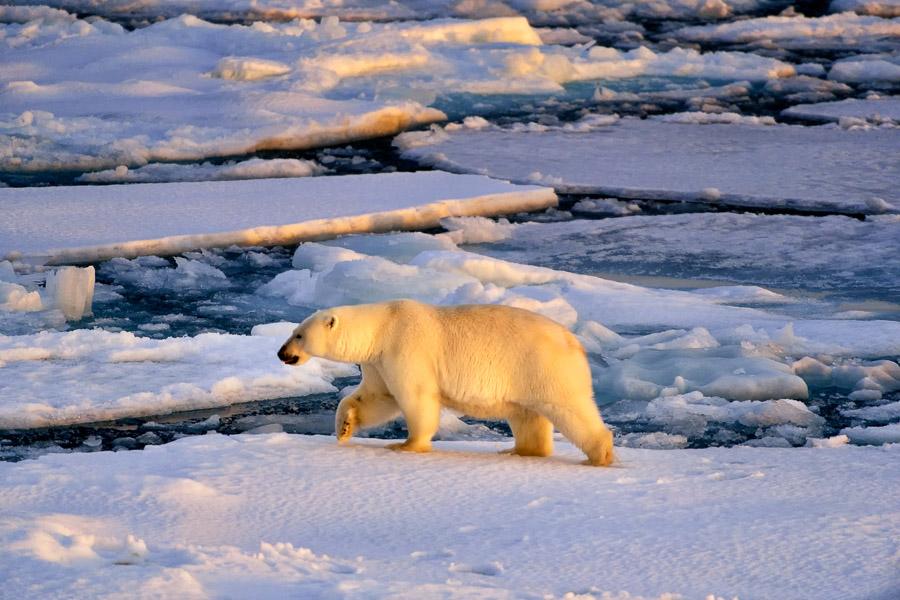 Polar-Quest-2014-0667