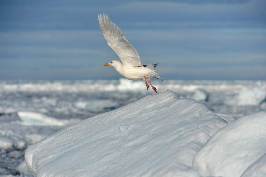 Polar-Quest-2014-0733