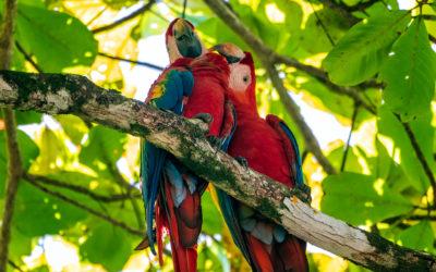 Costa Rica 2020