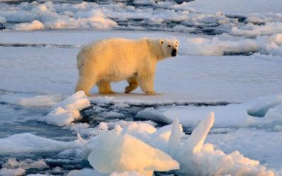 Svalbard 2014