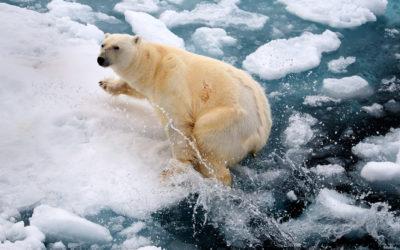 Svalbard 2008
